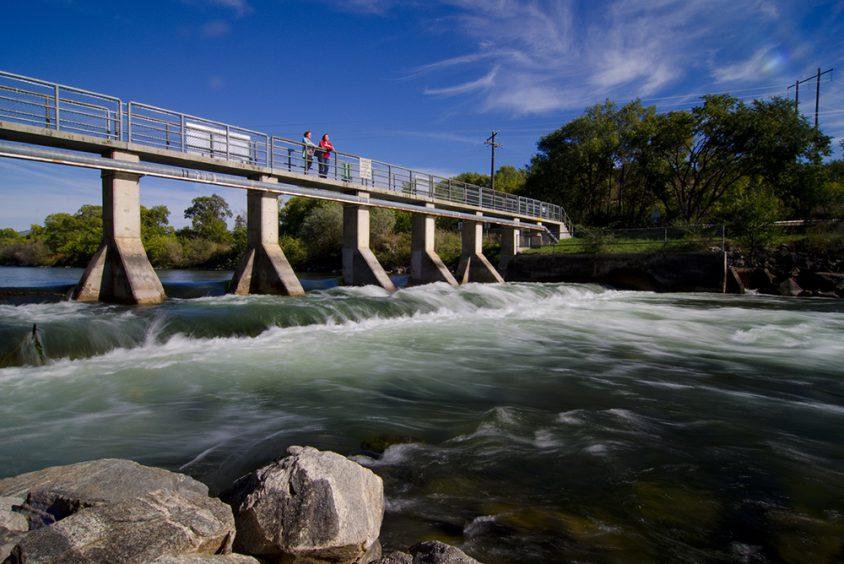 Salmon viewing, Okanagan River, Oliver, South Okanagan